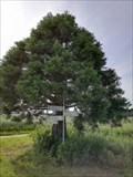 Image for Mammutbaum Nellingsheim, Germany, BW