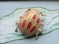 Image for Beetles - San Francisco, CA