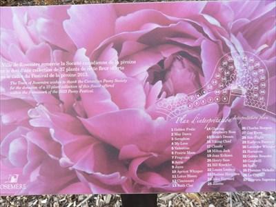Panneau des Pivoines de 1 a 36 dans cette aménagement en platebande.  Peonies panel from 1 to 36 in this development in flowerbed.