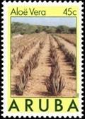 Image for Aruba Aloe Balm N.V. Aloe Vera Field - Hato, Aruba