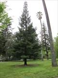 Image for Danette M Haller - Sacramento, CA
