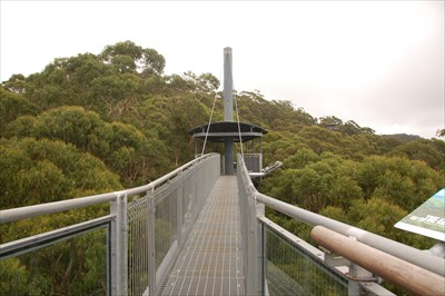 There are two sections of the Illawarra tree top walk that have cantilever arms where you walk out over the trees - this view is at the end of one of those arms looking back - the tower is also in the pic poking its top platform just above the trees