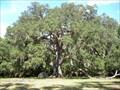 Image for Fairchild Oak