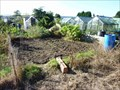 Image for Allotments, Stourport-on_Severn, Worcestershire, England