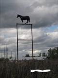 Image for Le cheval noir de St-Hilaire (Québec)