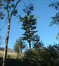 Image for Pine Tree Cell Phone Tower, Sunland-Tujunga, California