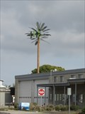 Image for Imperial Beach City Hall Palm Tree - Imperial Beach, CA