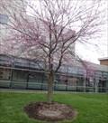 Image for M. Caroline Tirrell - Binghamton University  - Vestal, NY