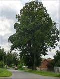 Image for Tree of the republic - Horní Újezd, Czech Republic