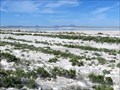 Image for Texas Salt Flats - Hudspeth County, TX, USA