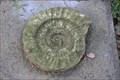 Image for Fossil auf Grabstein v. Heinrich Karl Erben - Poppelsdorfer Friedhof - Bonn, Germany