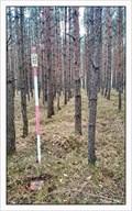 Image for TB 1615-28 U kamene, CZ