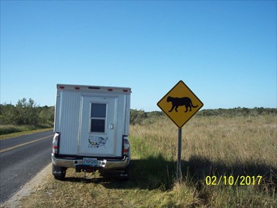 Florida Panther Crossing - Royal Palm Road, by MountainWoods