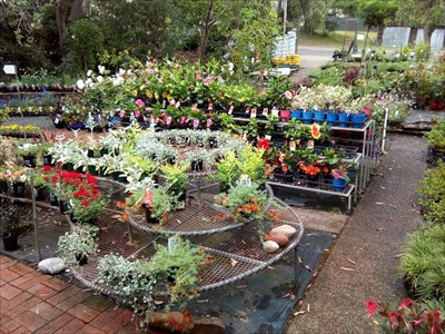 Looking towards William Street - plants for sale.