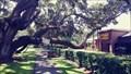 Image for Bloomingdale Florida Tree