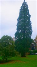 Image for Redwood on Kendal Green, Cumbria