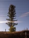 Image for Briggs Rd and Scott Rd, Menifee, CA Monopine