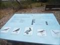 Image for Salt Marsh Birds  -  Carlsbad, CA