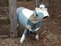 Image for Blue Cow - Walang, NSW, Australia