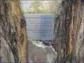 Image for Brunel's Tree - Railway Avenue, London, UK