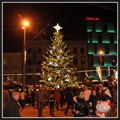 Image for Christmas Tree - Brno, Czech Republic