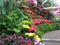 Image for Wanganui Winter Gardens.  Wanganui. New Zealand.