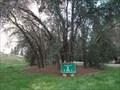 Image for Austin B Carroll Grove - Sacramento CA