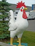 Image for Rooster - Airdrie, AB