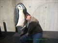 Image for Penguins Bench, New England Aquarium - Boston, MA