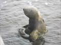 Image for Walrus - Ormond Beach, FL