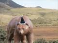 Image for Bear Statue - Los Osos, CA