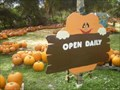 Image for Pumpkin Time!