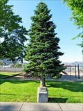 Image for Bicentennial Tree - Coulee Dam, WA