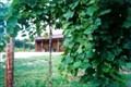 Image for Massbach Ridge Winery - Elizabeth, IL
