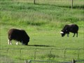 Image for The Musk Ox Farm, Palmer, Alaska