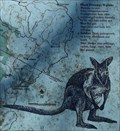 Image for Black (Swamp) Wallaby - Orbost, Vic, Australia