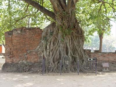 The Head of Sandstone Budha - Ayutthaya, Thailand