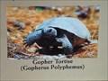 Image for Cedar Point Preserve Kiosk Sign - Jacksonville, FL