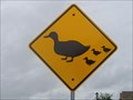 Image for Duck Crossing - Flower Mound, TX
