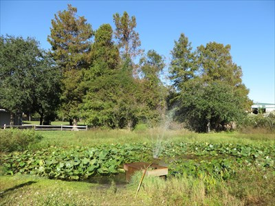 Chapman Botanical Garden - Apalachicola
