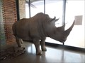 Image for Rhino #2  -  near eMalahleni, South Africa