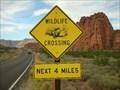 Image for Desert Tortoise