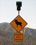 Image for Bighorn Sheep Crossing - Big Sky, MT