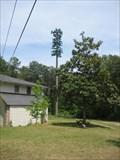 Image for Shady Tree - Lilburn, GA