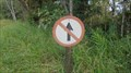 Image for Don't go stright ahead - Intervales Park, Brazil