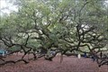 "Image for ""Community celebrates preservation of land around Angel Oak"" - Johns Island, South Carolina"