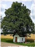 Image for Kitzinger Kapelle - Bartholomä, BW, Germany