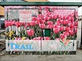 Image for Tulip Field - Trail, BC
