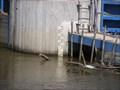 Image for Berounka river gauge, Bukovec, PM, CZ, EU