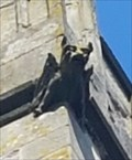 Image for Gargoyles - St Peter - Aston Flamville, Leicestershire